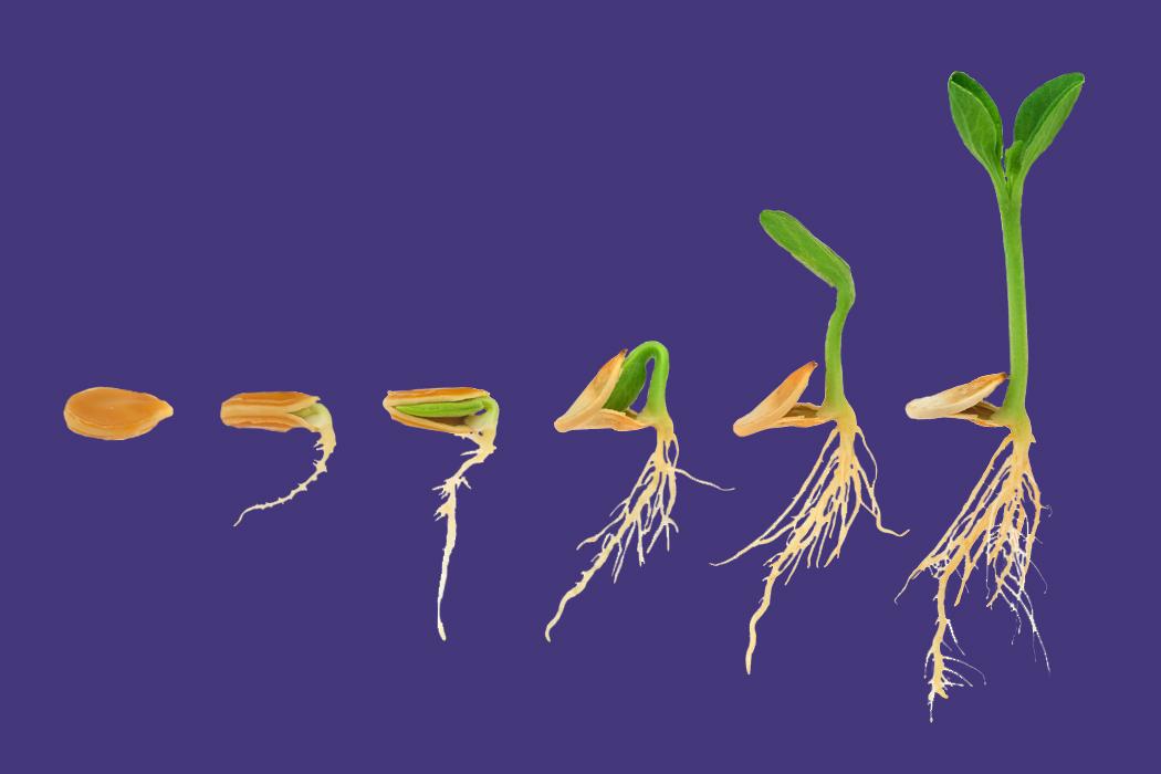 Seed_Growth_1
