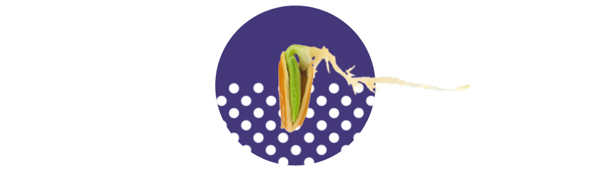 Seeds_3